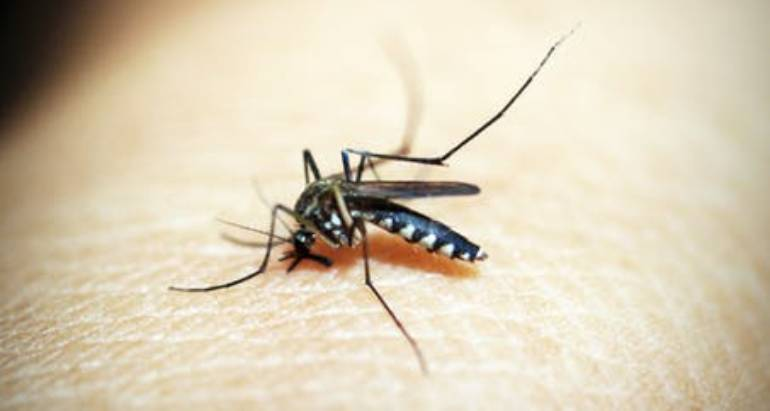 The Return Of The West Nile Virus