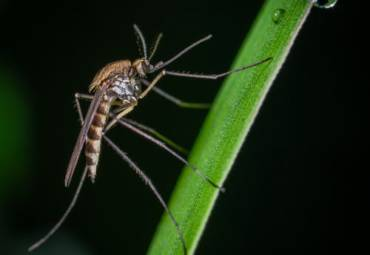 What You Should Know About Mosquito Diseases In The United States